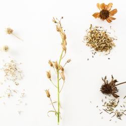 saving-seeds-featured-image