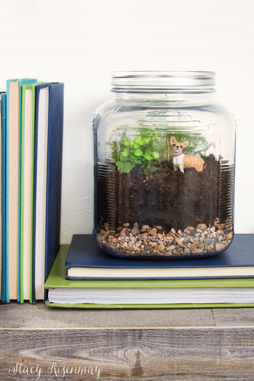 terrarium-for-little-boys