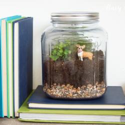 terriarium-in-a-glass-jar
