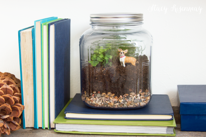 terriarium-in-a-glass-jar