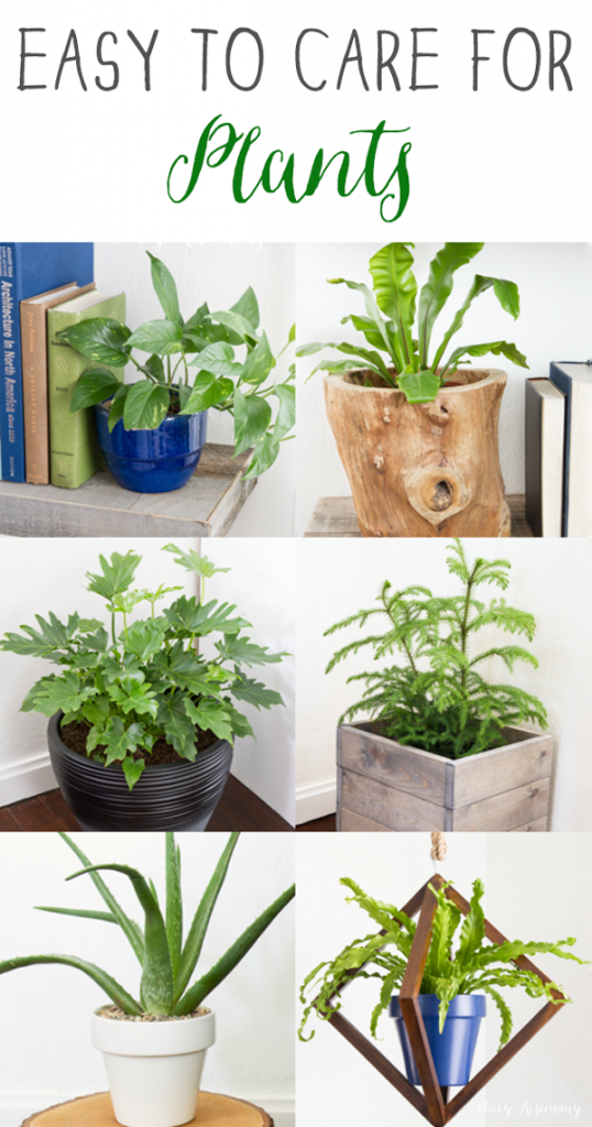 15 easy to care for houseplants stacy risenmay