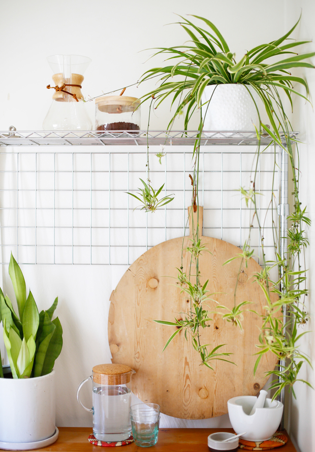 15 easy to care for houseplants! Spider-Plant