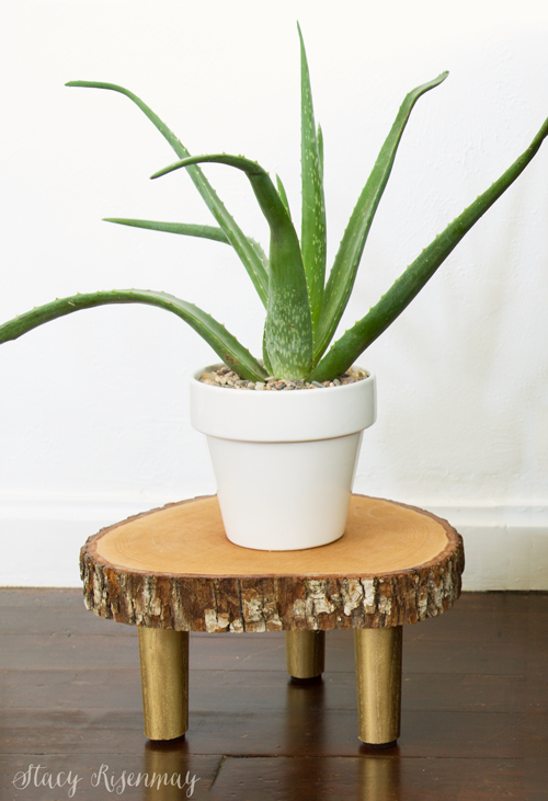15 easy to care for houseplants! aloe-vera-plant