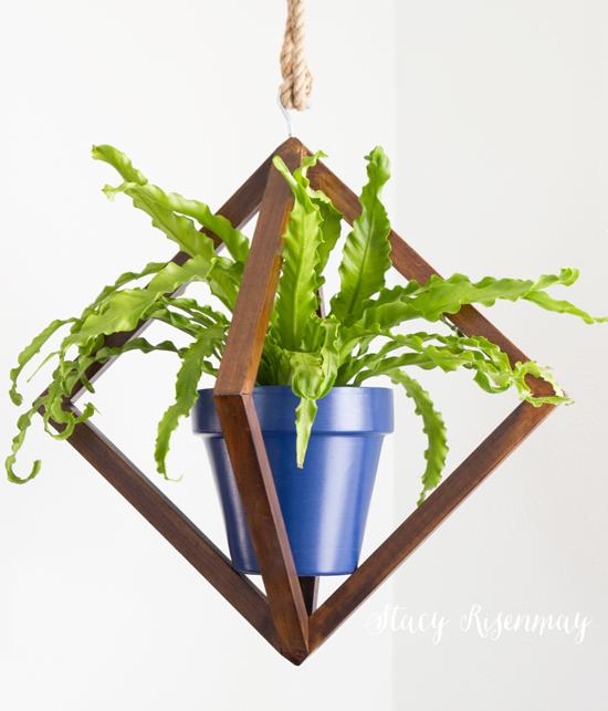 15 easy to care for houseplants! bird-nest-fern