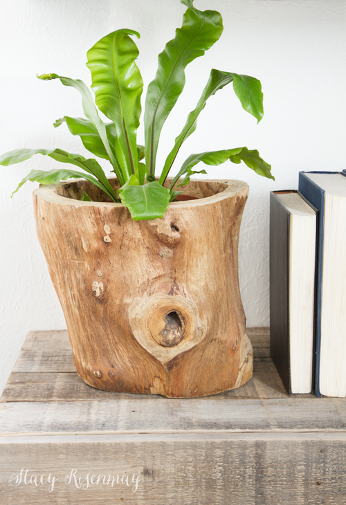 15 easy to care for houseplants! birds-nest-fern-plant