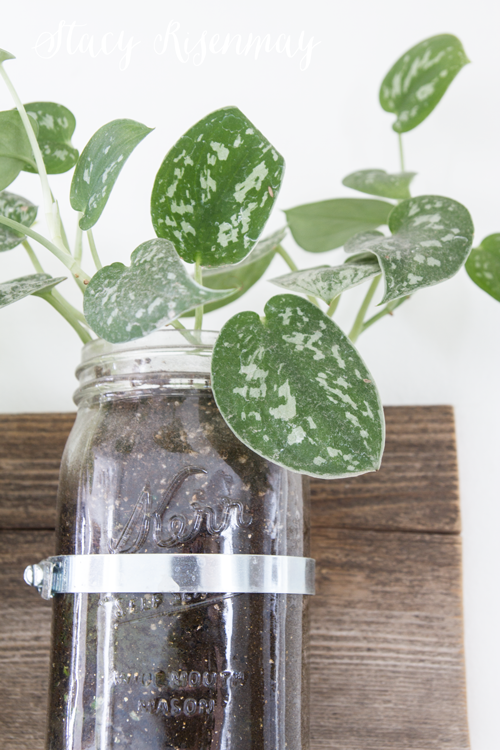15 easy to care for houseplants! pothos