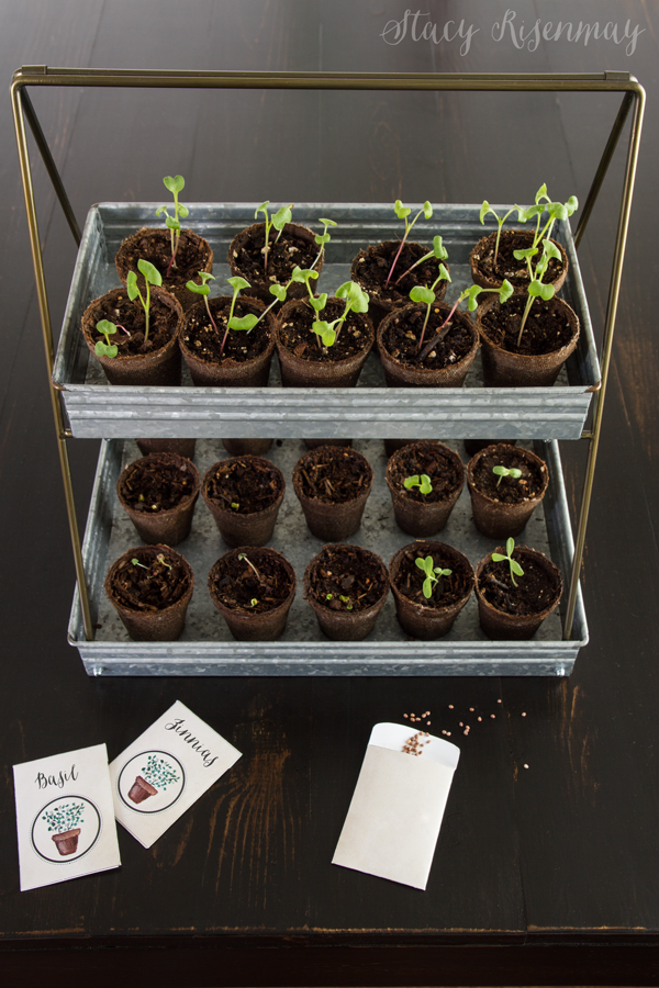 seedlings in metal tiered tray