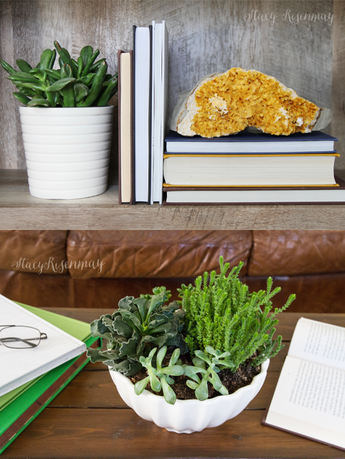 15 easy to care for houseplants! succulent-plants