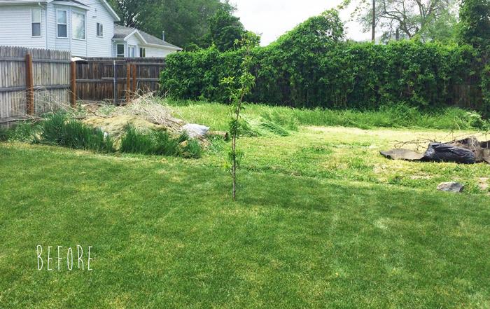 back-of-yard---before