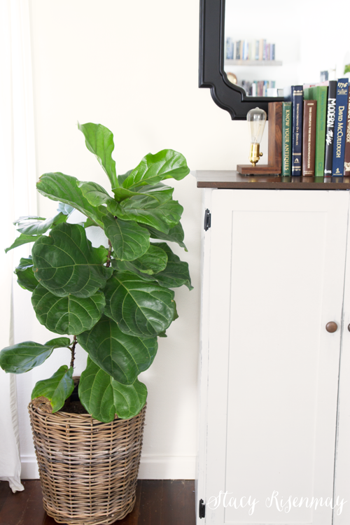 basket-pot-for-fiddle-leaf-tree