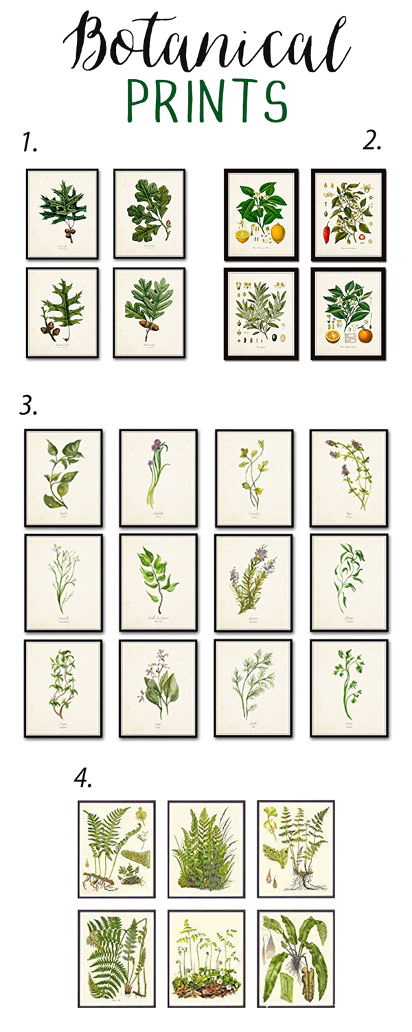 favorite-botanical-prints