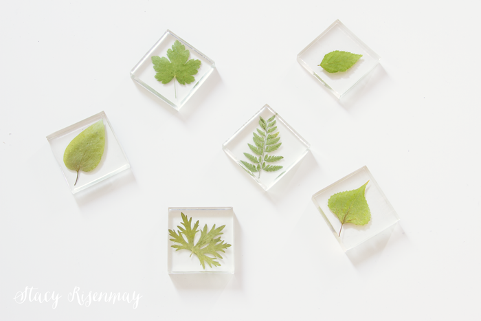leaves in resin for magnets