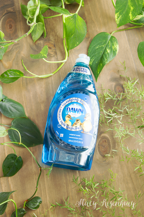 Dawn Dish Soap limited edition bottle