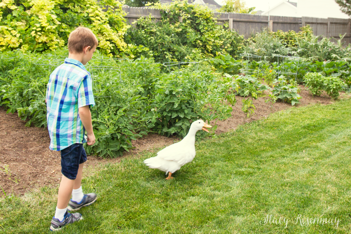 boy chasing duck