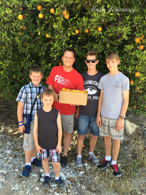 picking oranges in california