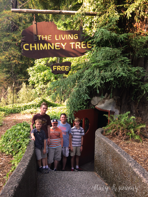 the living chimney tree