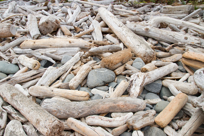 piles of driftwood