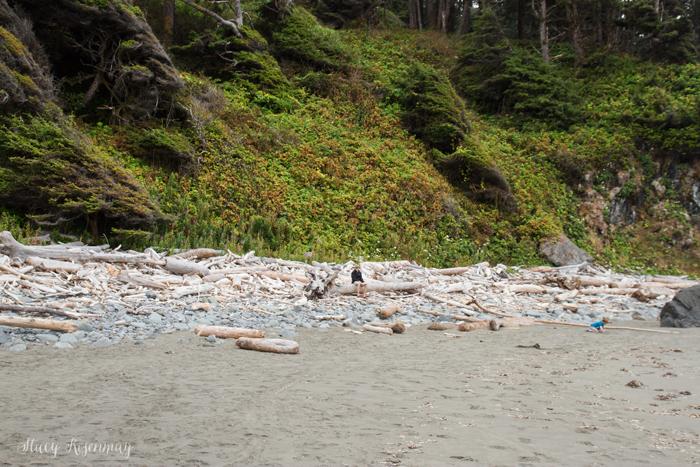 driftwood at hidden beach
