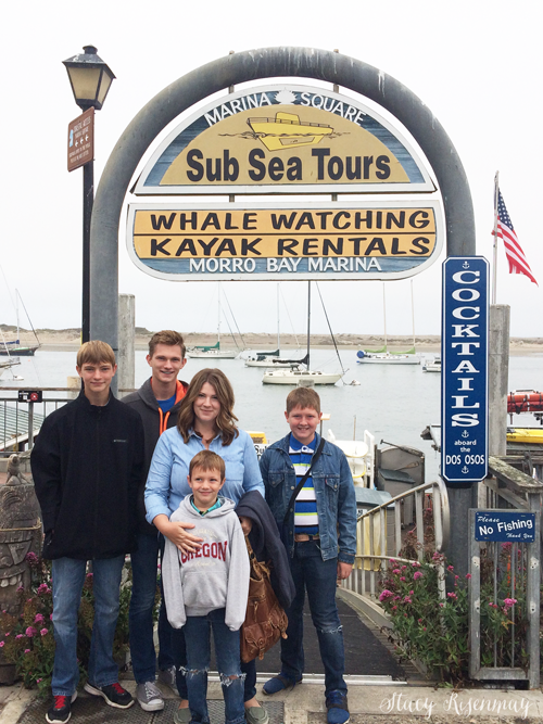 whale watching tour in california