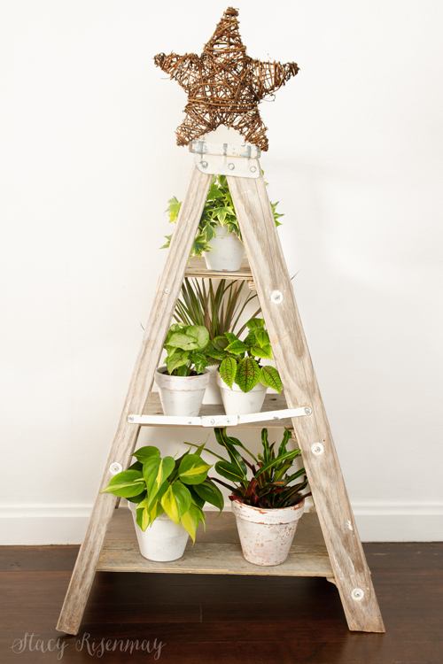 ladder and plants