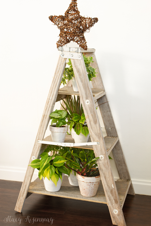 ladder filled with plants