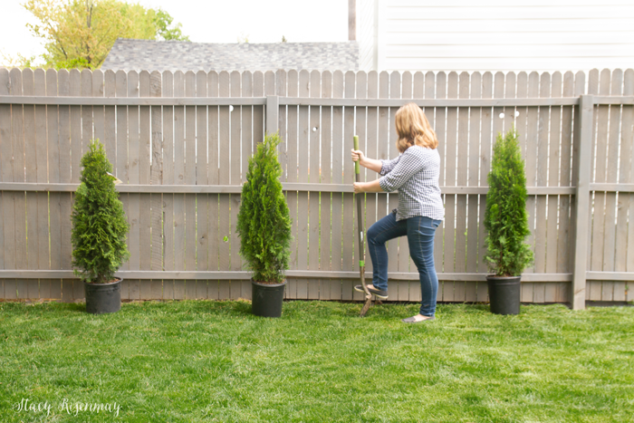 planting shrubs for privacy