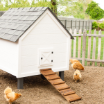 Chicken Coop Makeover {Giveaway!}