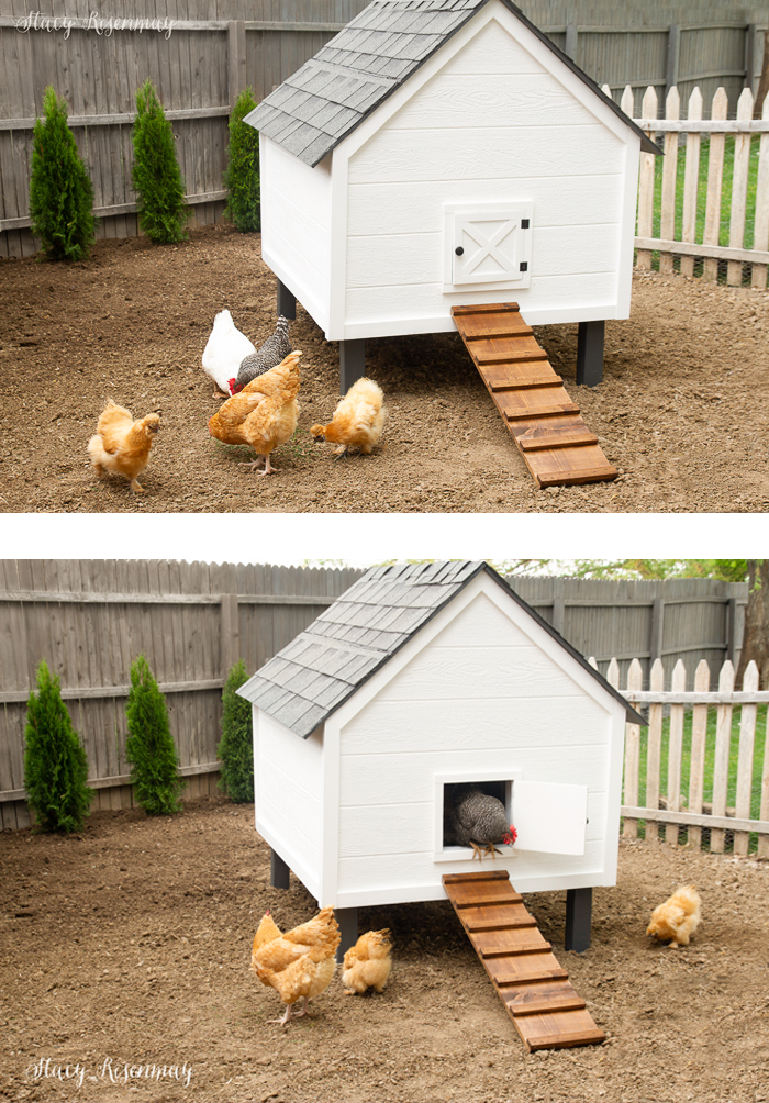 white chicken coop