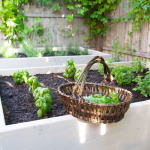 Raised Garden Beds {The Secret Garden Makeover!}