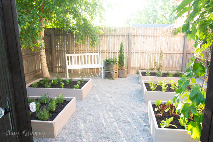raised garden beds with herbs
