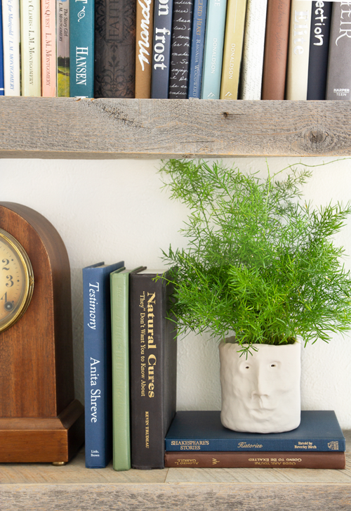 clay head planter on book shelf