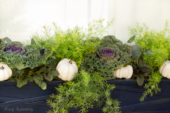 white pumpkins and plants in window boxes