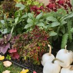 Preparing Your Yard For Fall {Mini Makeover!}