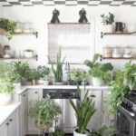 Houseplant Care For Beginners