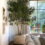 Crushing On: Large Indoor Trees