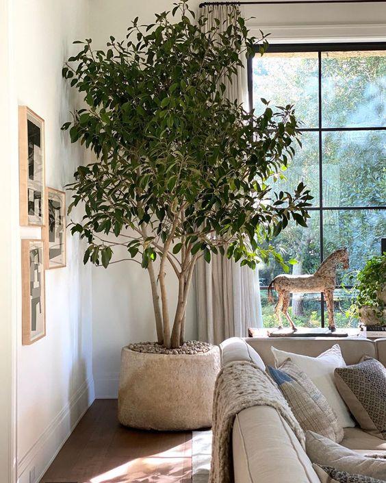large indoor tree