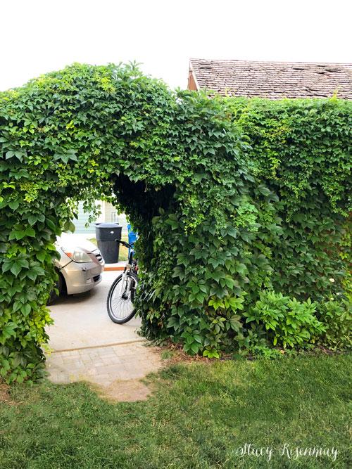 archway before adding a backyard gate