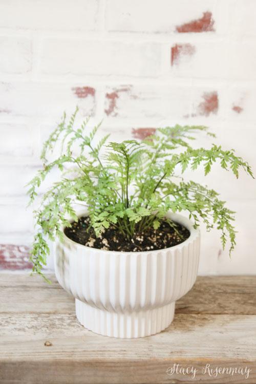white ribbed pedestal planter