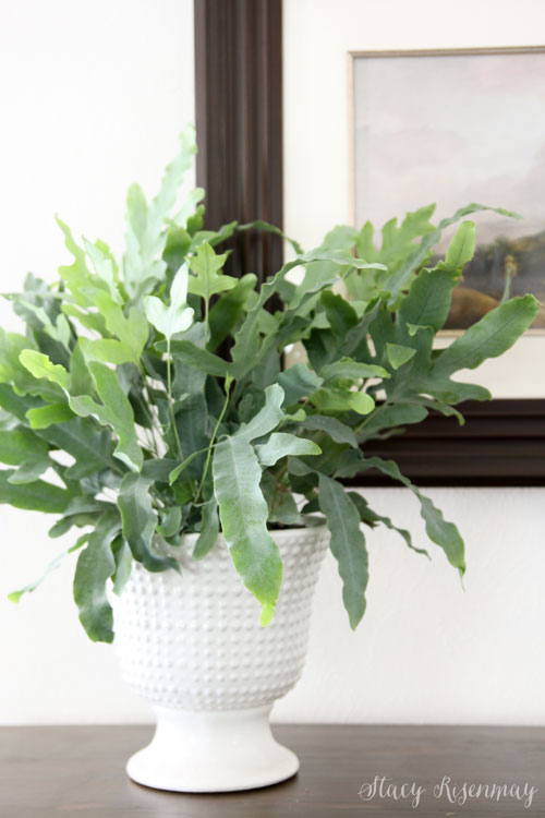 white pedestal planter
