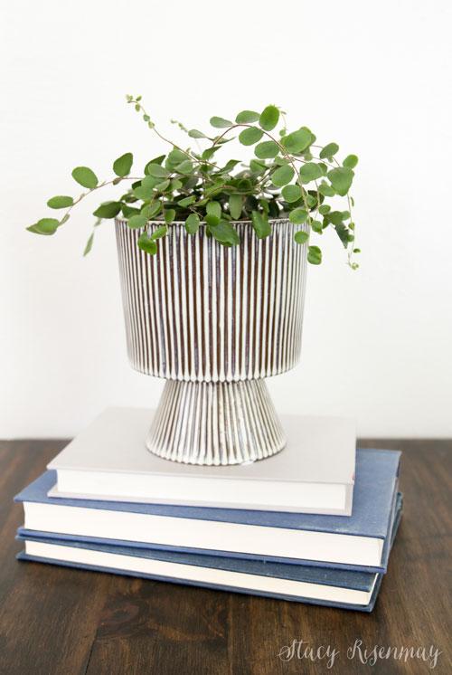 pedestal planter with button fern