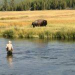Visiting Yellowstone